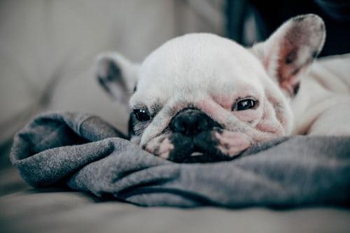 chien santé problème arthrose
